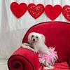 PR-Valentine2013-9930