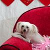 PR-Valentine2013-9933