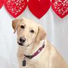 PR-Valentine2013-9810