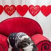 PR-Valentine2013-9755