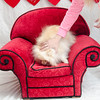 PR-Valentine2013-9756