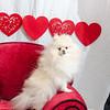 PR-Valentine2013-9761