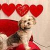 PR-Valentine2013-9701