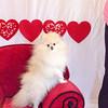 PR-Valentine2013-9759