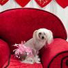 PR-Valentine2013-9939