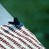 Swallowtail Butterfly on Back Porch Bench - July 1998
