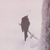 Female Cardinal - Snowstorm in Alabama - 6 Inches of Snow  3-12-93