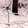 Blue Jay - Snowstorm in Alabama - 6 Inches of Snow  3-12-93