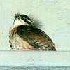Wren Fledgling on Ledge on Back Porch - No Date Known For This Photo