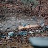 Blue Jay in Backyard - March 1993