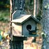 Yellow-bellied Flycatcher - July 1996