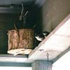 Wren Nest Basket - May 1997