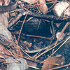 Toad in Hole in Ground  10-25-97