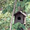 Snake Peeking Out of Backyard Birdhouse - May 1993