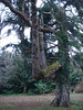 Unusual tree in the park
