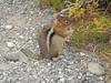 This little guy loved the granola bar bit!