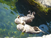 Loved the otters