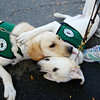 The Seeing Eye puppies at the NJ Gran Fondo 2014