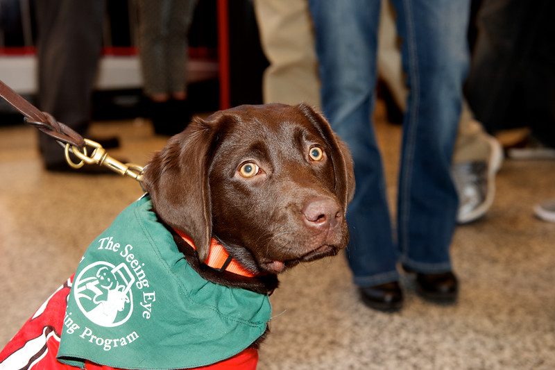 The Seeing Eye puppies at the Prudential Center March 03, 2015