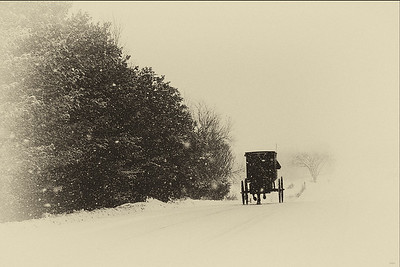 Amish Buggy in Snow Black and White