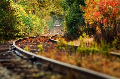 Autumnal Tunnel