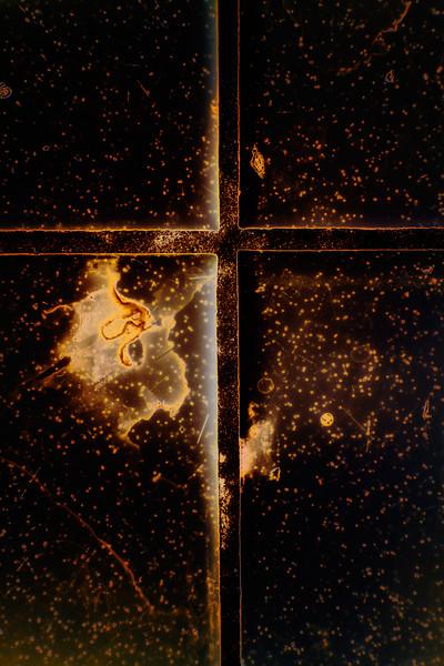 Petri Dish Universe