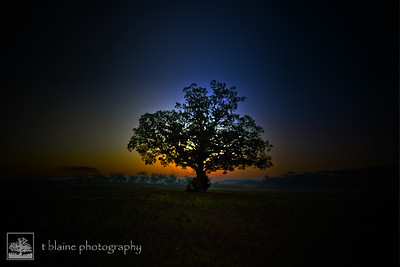 The Tree Sunrise