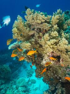 carles reef042