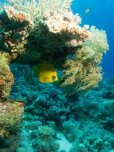 carles reef035