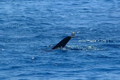 delphin4