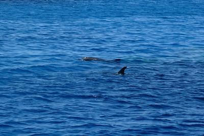 delphin2