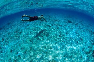 reef madrepora sub corallo grotta