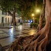 Rubber Tree Plaza
