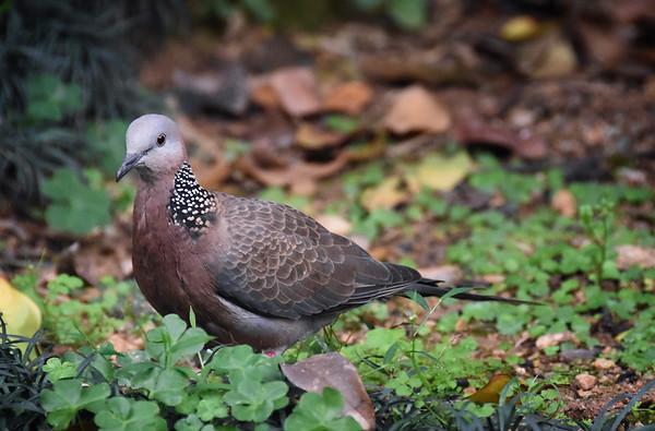 Nan Liang Bird