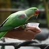 Feeding the Parakeet
