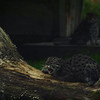 The Fishing Cats