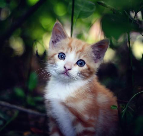 A Brave Kitten II