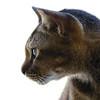 A Feline Profile