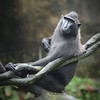 A Macaque Forethought
