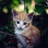 A Brave Kitten III