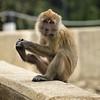 Foot Shaking Monkey