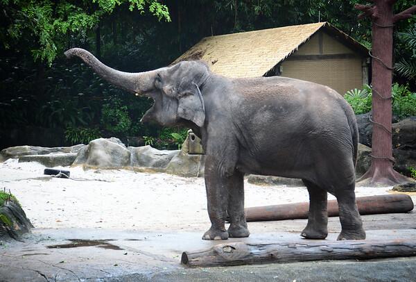 An Elephant Salute