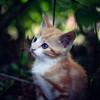 A Brave Kitten I