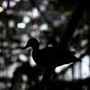 A Shadow Bird