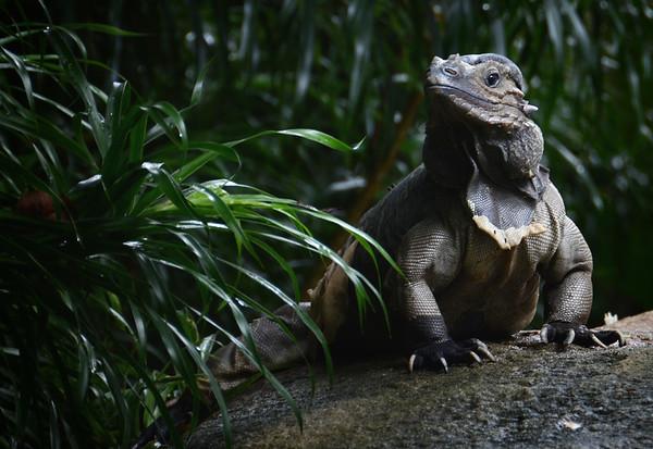 A Singapore Dragon
