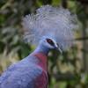 A Pigeon Profile