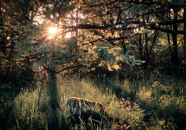 A Forest Spotlight