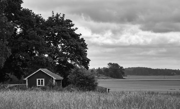 The Midsummer Fields