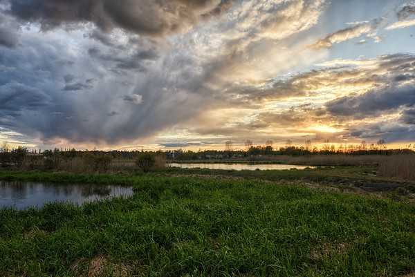 Sunset Wetlands Grass