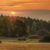 A Sunrise Field
